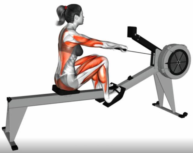 Tập luyện máy Rowing sai cách sẽ gây chấn thương lên nhiều nhóm cơ.