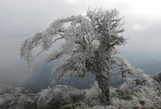 Qúa đẹp rừng cây phủ thuyết ở Cao Bằng